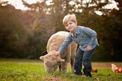 canton-photography-sheep