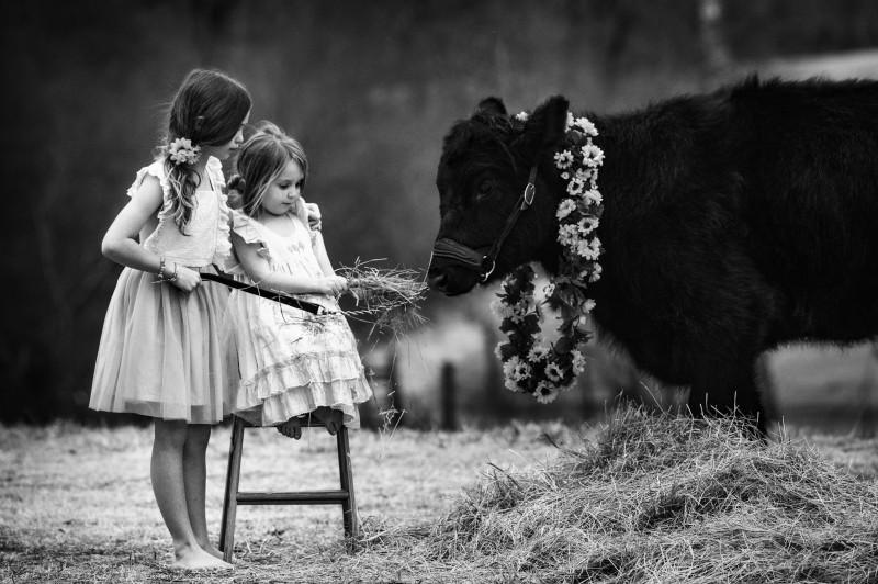 Daisy-And-Friends-0196ebw