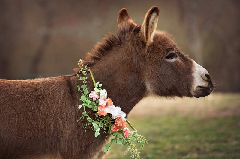 Donkey-With-Flowers