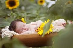 newborn-sunflower-farm-alpharetta-2