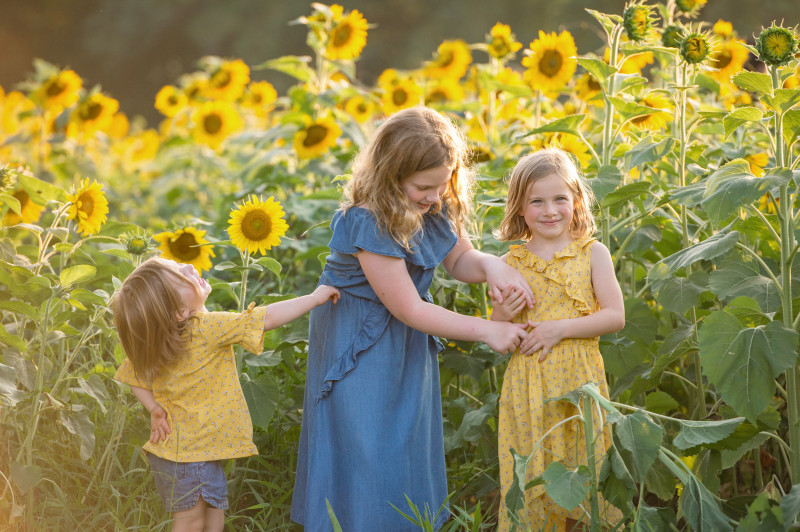 Sunflowers-7414-188e