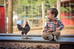 Boy-With-Rooster-Picture