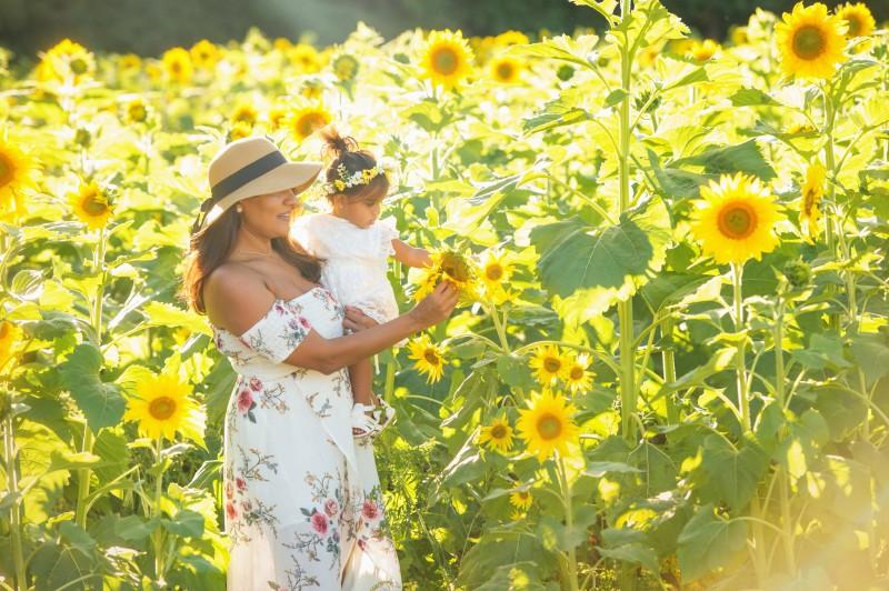 Patel-Sunflowers-2020-7582e