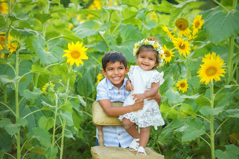 Patel-Sunflowers-2020-8124-Editfinal