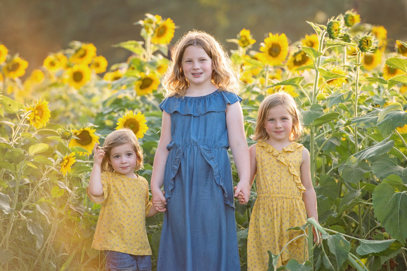 Sunflowers-7386-171e