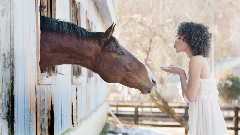 horse-farm-styled-photography-milton