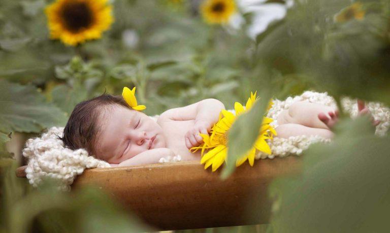 newborn-sunflower-farm-alpharetta