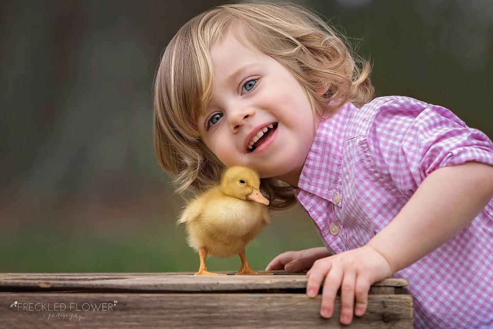 duckling-snuggles-animal-photography